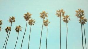 palmeras de Los Ángeles con un cielo azul de fondo