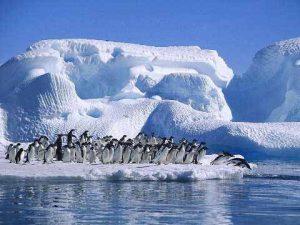 Luna de miel en la Antártida