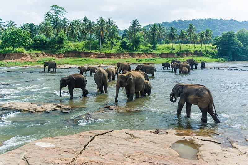 lunas-de-miel-2017-sri-lanka-elefantes