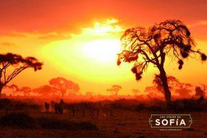 Safari 2016