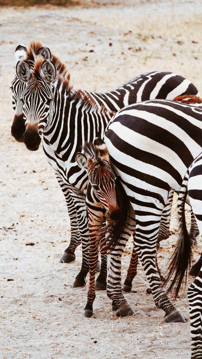 ¿Hacer un safari con niños es posible?