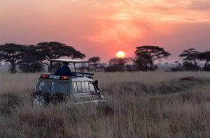 vehículo en un safari de lujo