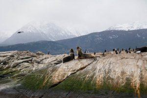Leones marinos sobre una roca en Ushuaia