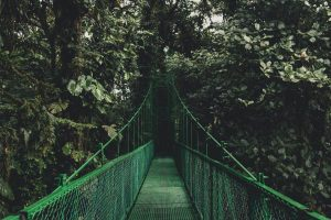 Puente colgante en la Reserva Biológica de Monteverde