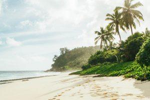 Playa de arena blanca y palmeras en las islas Seychelles