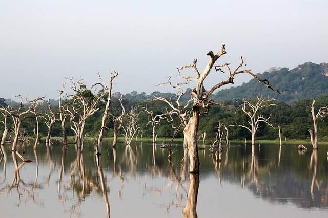 parque nacional yala-Sri lanka