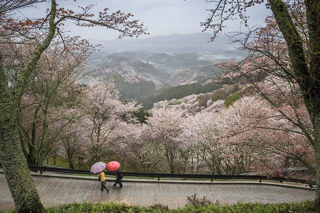 Parque Nara en flor