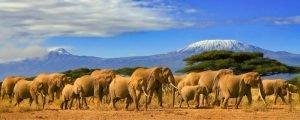 Parques Naturales de Kenia