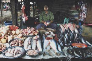 pescadero birmano