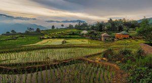 Campos de arroz vietnamitas