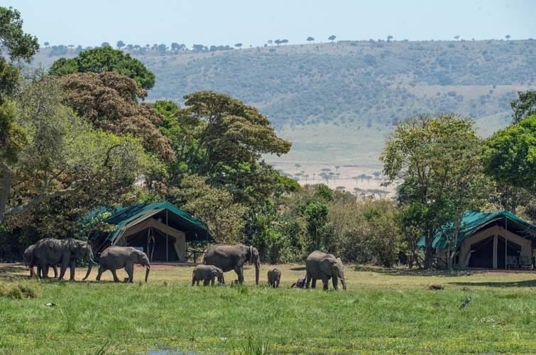Tented camp junto a una manada de elefantes