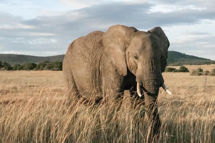 Elefante en un parque nacional de Kenia