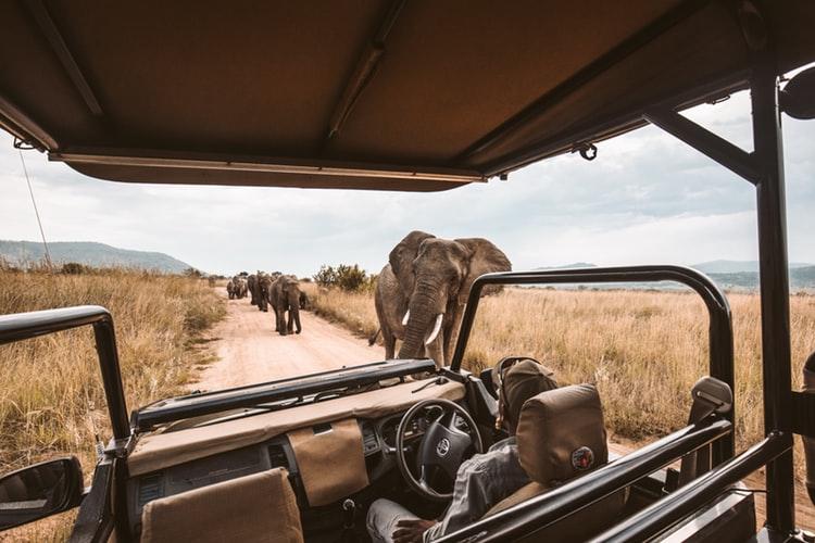 Vehículo rodeado de elefantes en un safari por África