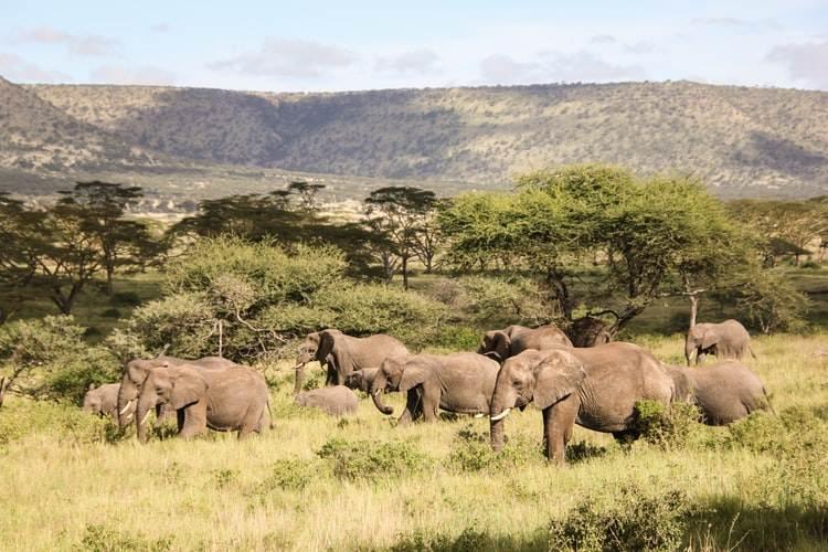 Manada de elefantes en libertad en Tanzania