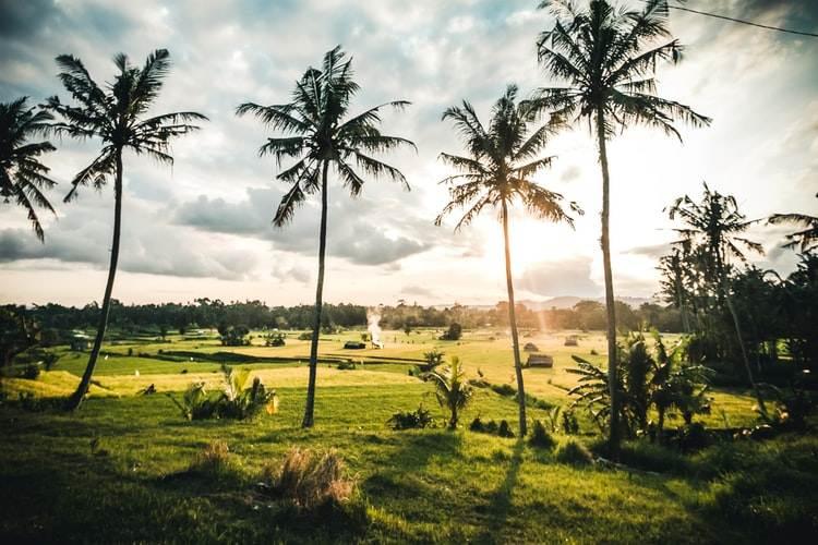 Palmeras y plantaciones en Indonesia
