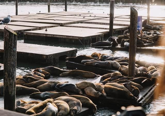 pier 39 y leones marinos