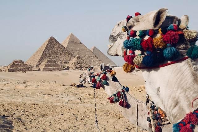 Camelos y las pirámides de Egipto