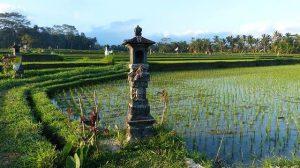 plantaciones en Bali