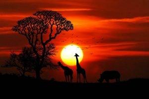 Portada de Safari de lujo