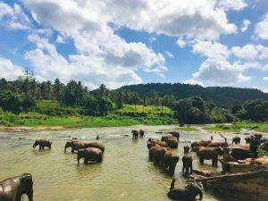 Elefantes tomando un baño en el Parque Nacional de Yala