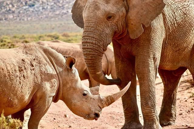 rinoceronte y elefante
