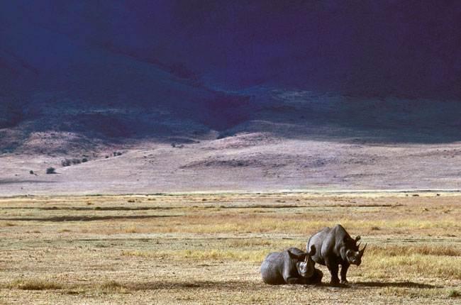 Rinocerontes en mitad de la sabana