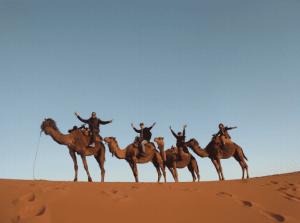 Camellos en Marruecos