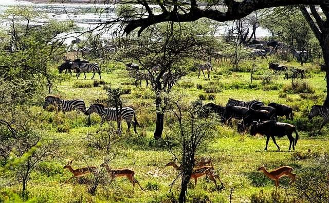 animales en Tanzania
