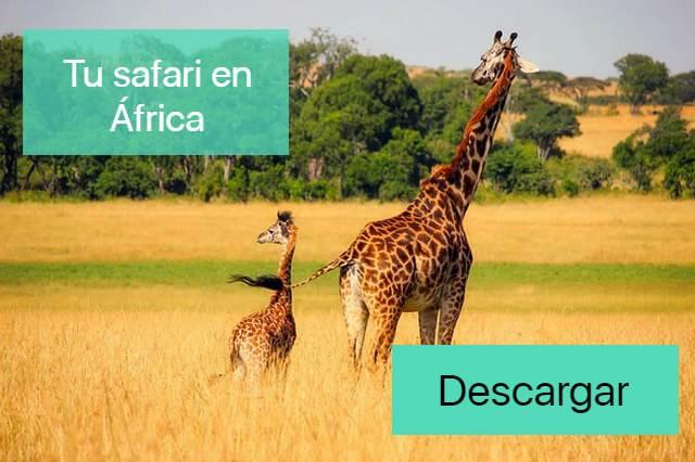 banner safari en kenia