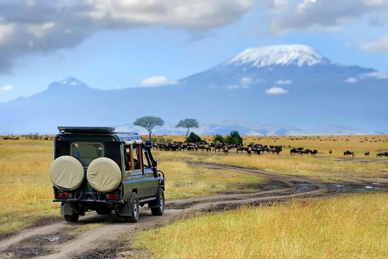 coche de safari