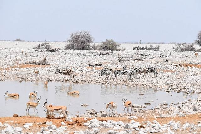 safari en namibia en etosha