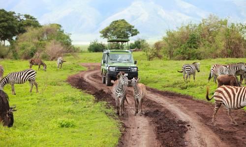 cebras en un safari en africa