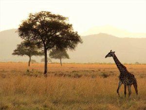 un safari por Africa