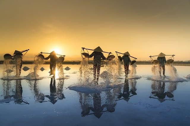 arroceros en vietnam