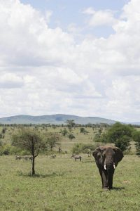 Elefante en el Serengueti