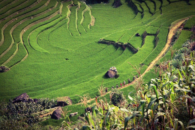 arrozales en sapa, vietnam