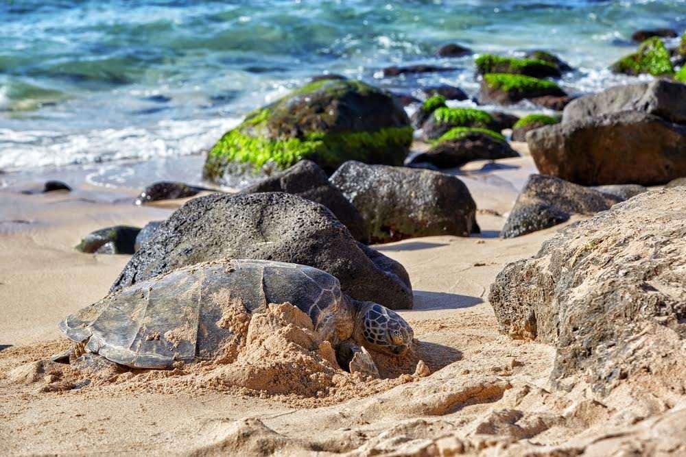 snorkel mejores playas del mundo isla oau