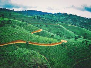 Vista aérea de campos de té en Sri Lanka