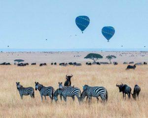 Cebras y Ñus en la sabana africana con globos aeroestáticos
