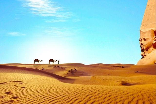 Camellos en el desierto egipcio