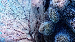 Corales en el fondo marino de Nosy Be