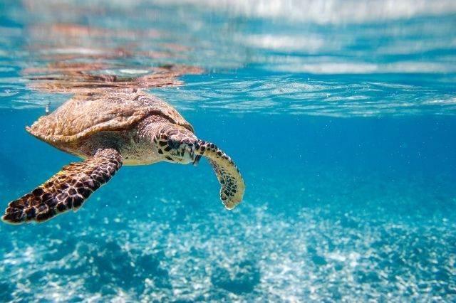 Tortuga en Seychelles