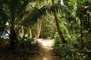 Palmeral en el Parque Nacional de Tortuguero