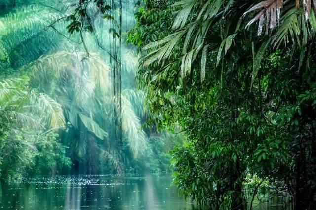 Parque Nacional de Tortuguero en Costa Rica