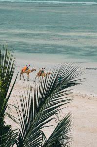 Camellos a la orilla del océano